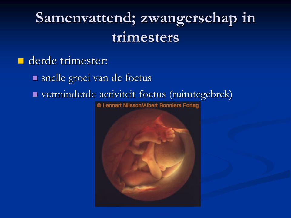 Samenvattend; zwangerschap in trimesters derde trimester: derde trimester: snelle groei van de foetus snelle groei van de foetus verminderde activiteit foetus (ruimtegebrek) verminderde activiteit foetus (ruimtegebrek)