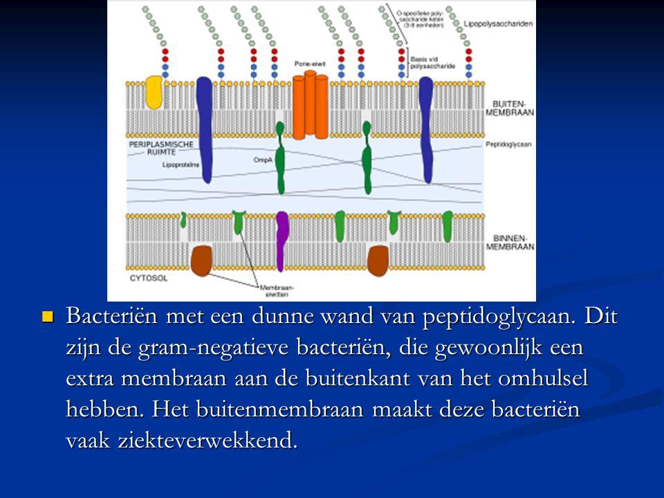 Bacteriën met een dunne wand van peptidoglycaan. Dit zijn de gram-negatieve bacteriën, die gewoonlijk een extra membraan aan de buitenkant van het omh