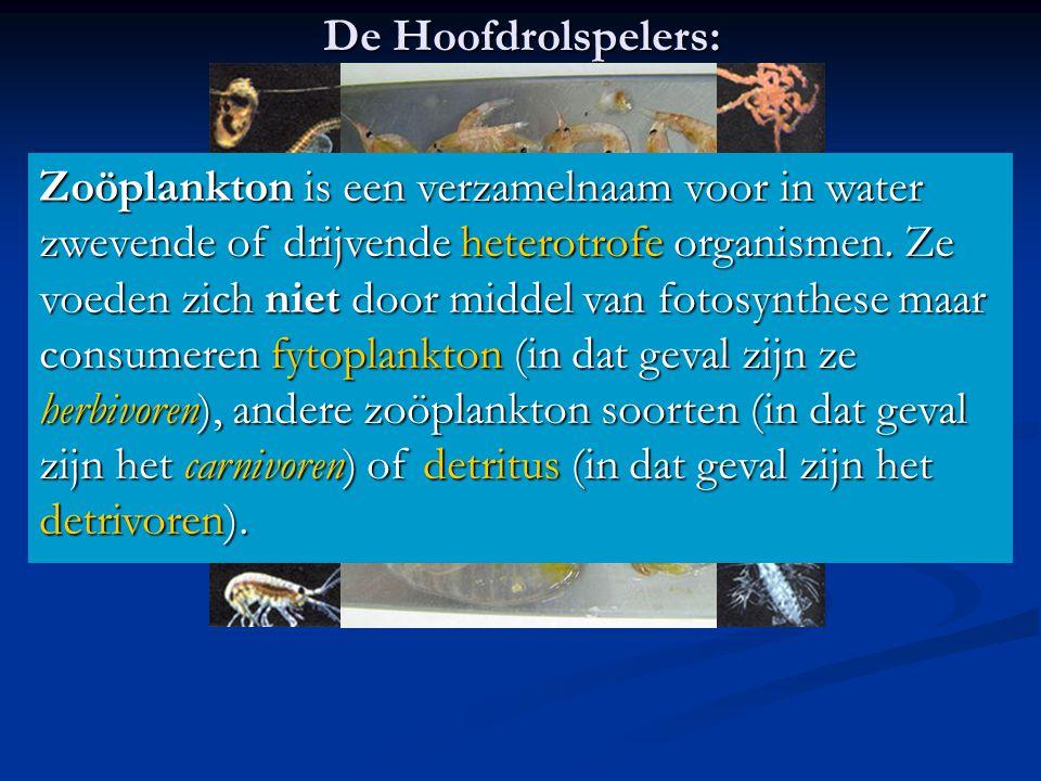 De Hoofdrolspelers: Zoöplankton is een verzamelnaam voor in water zwevende of drijvende heterotrofe organismen. Ze voeden zich niet door middel van fo