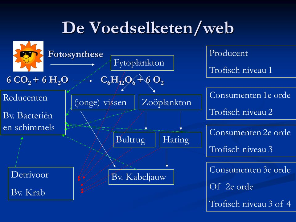 De Voedselketen/web Fotosynthese 6 CO 2 + 6 H 2 O C 6 H 12 O 6 + 6 O 2 Fytoplankton Producent Trofisch niveau 1 Zoöplankton(jonge) vissen Consumenten