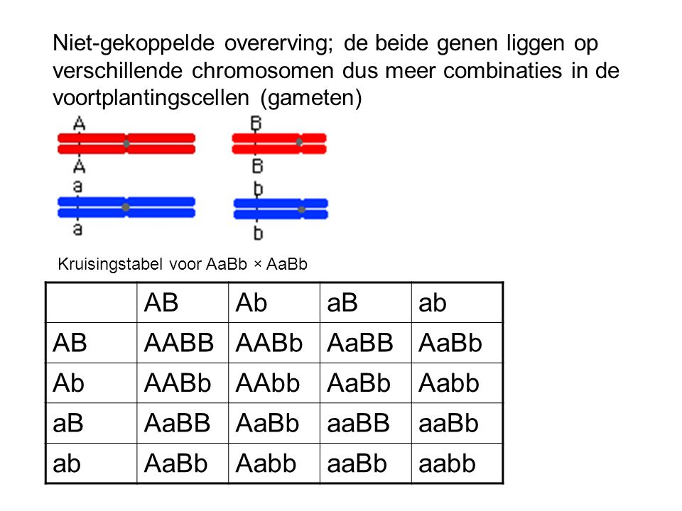 Verhouding die ontstaat is dus; Fenotype; 9 Dominant voor beide: 3 Dominant A, recessief b: 3 recessief a, Dominant B : 1 recessief voor beide Ongekoppelde dihybride kruising kun je zien als twee losse monohybride kruisingen die gecombineerd worden.