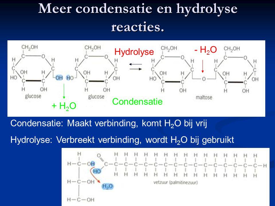 Meer condensatie en hydrolyse reacties. Hydrolyse - H 2 O Condensatie + H 2 O Condensatie: Maakt verbinding, komt H 2 O bij vrij Hydrolyse: Verbreekt