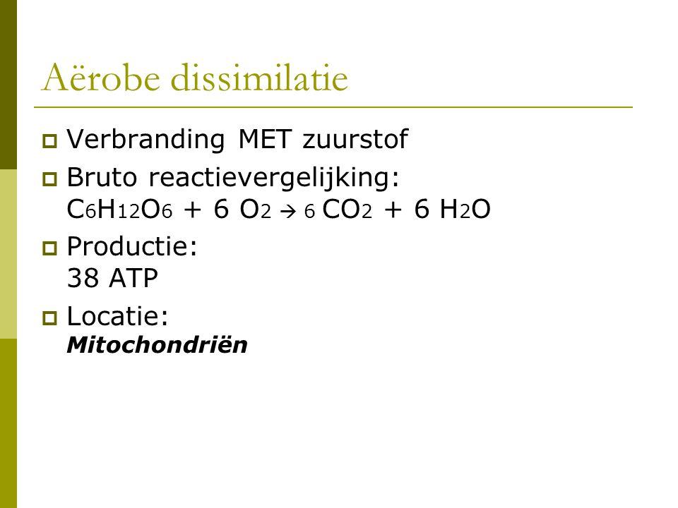 Aërobe dissimilatie  Verbranding MET zuurstof  Bruto reactievergelijking: C 6 H 12 O 6 + 6 O 2  6 CO 2 + 6 H 2 O  Productie: 38 ATP  Locatie: Mit