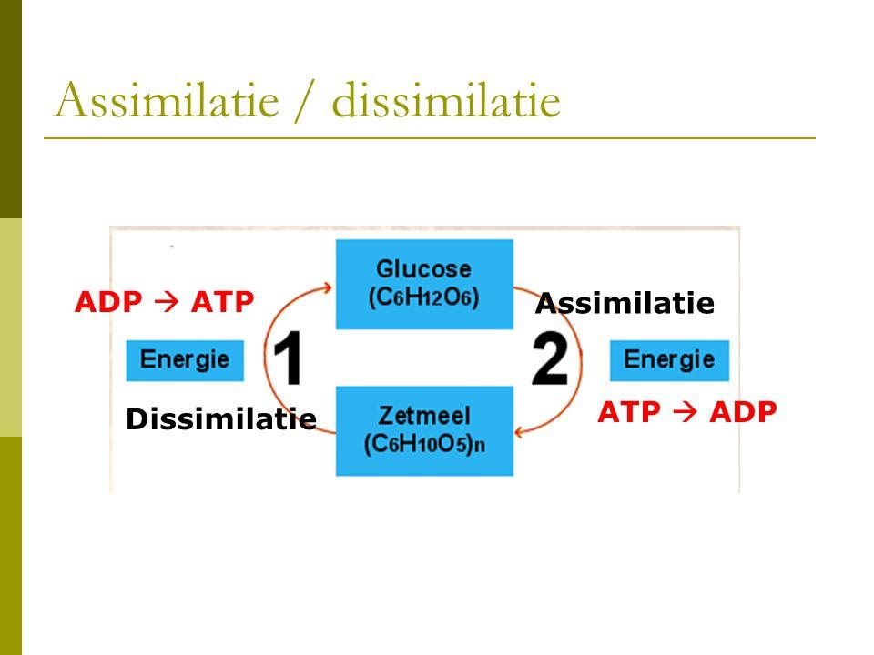 Assimilatie / dissimilatie Assimilatie Dissimilatie ADP  ATP ATP  ADP