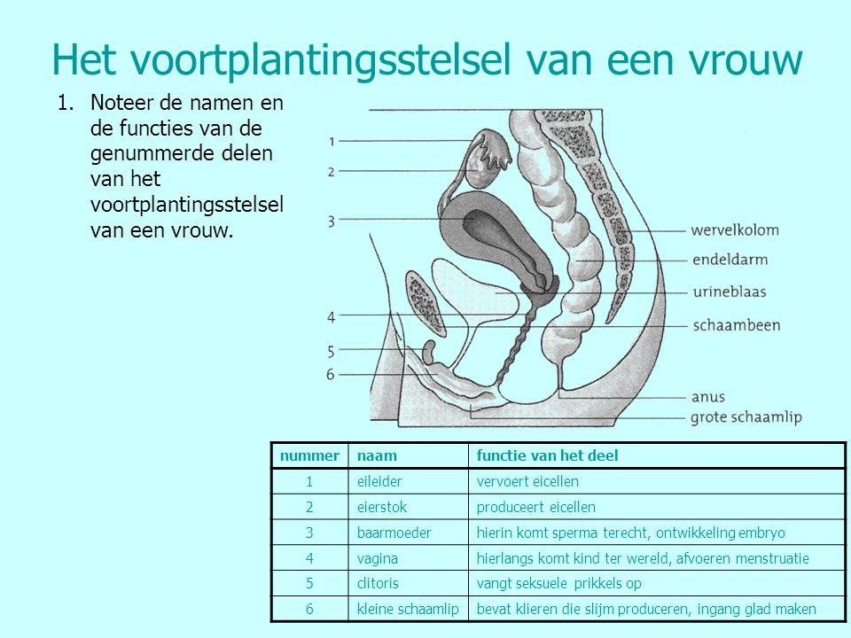 Het voortplantingsstelsel van een vrouw 1.Noteer de namen en de functies van de genummerde delen van het voortplantingsstelsel van een vrouw. nummerna