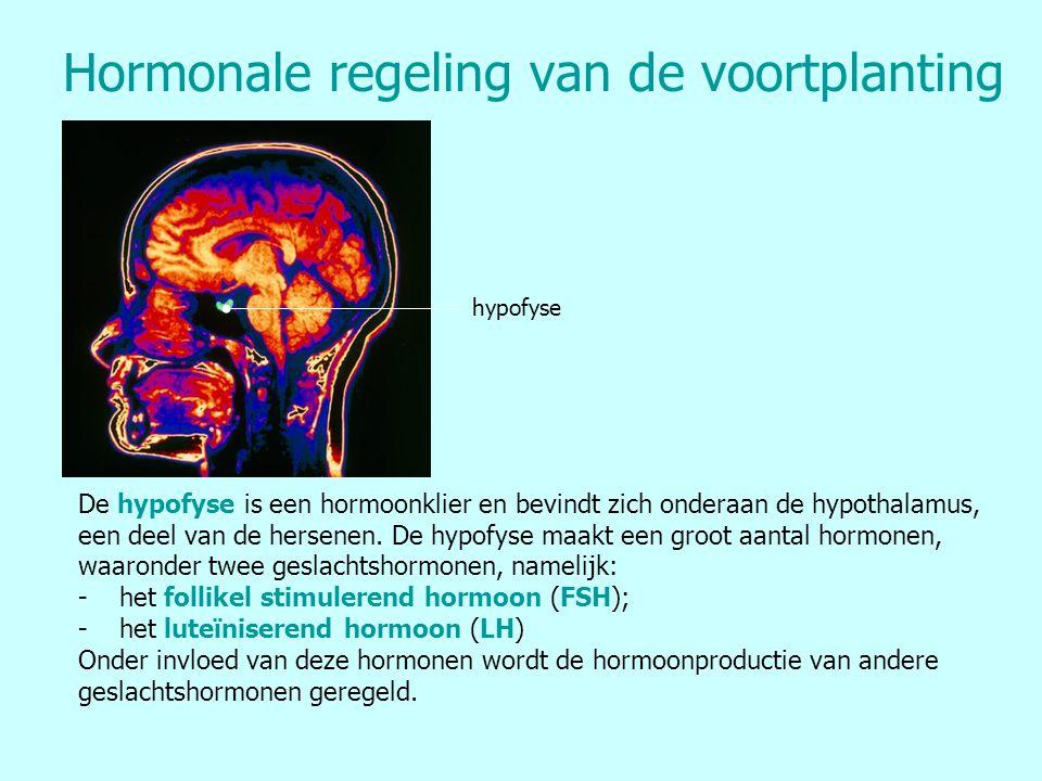 Hormonale regeling van de voortplanting hypofyse De hypofyse is een hormoonklier en bevindt zich onderaan de hypothalamus, een deel van de hersenen. D