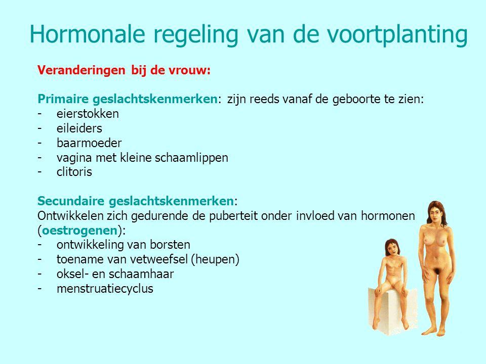 Hormonale regeling van de voortplanting Veranderingen bij de vrouw: Primaire geslachtskenmerken: zijn reeds vanaf de geboorte te zien: -eierstokken -e