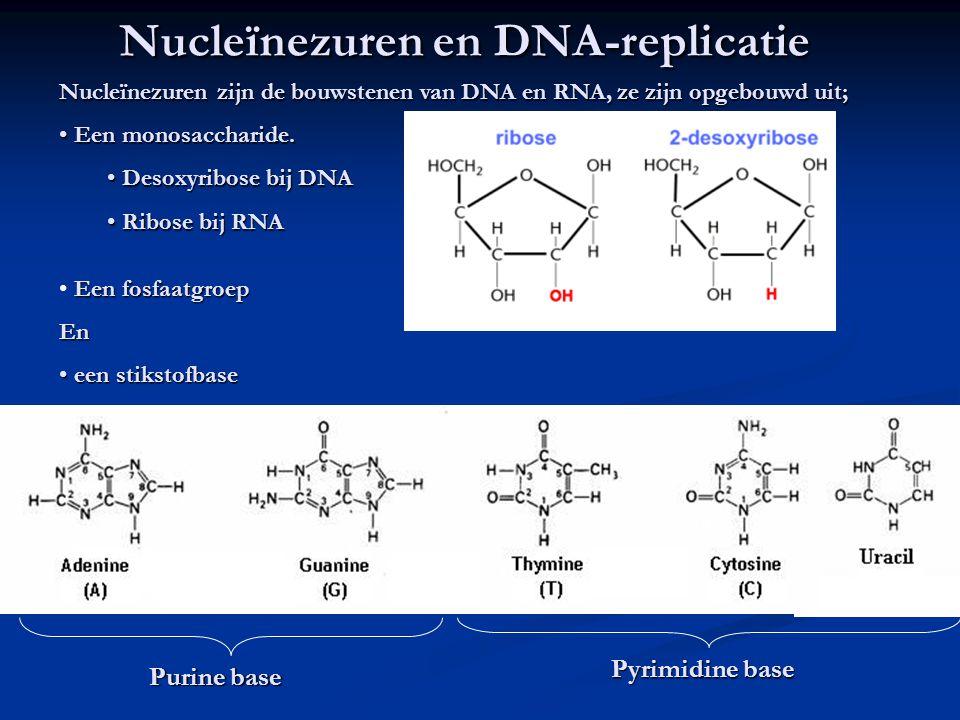 Nucleïnezuren en DNA-replicatie Nucleïnezuren zijn de bouwstenen van DNA en RNA, ze zijn opgebouwd uit; Een monosaccharide.