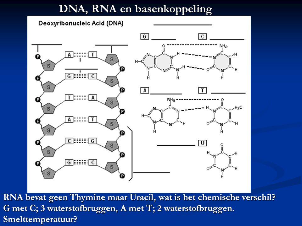 DNA, RNA en basenkoppeling RNA bevat geen Thymine maar Uracil, wat is het chemische verschil.