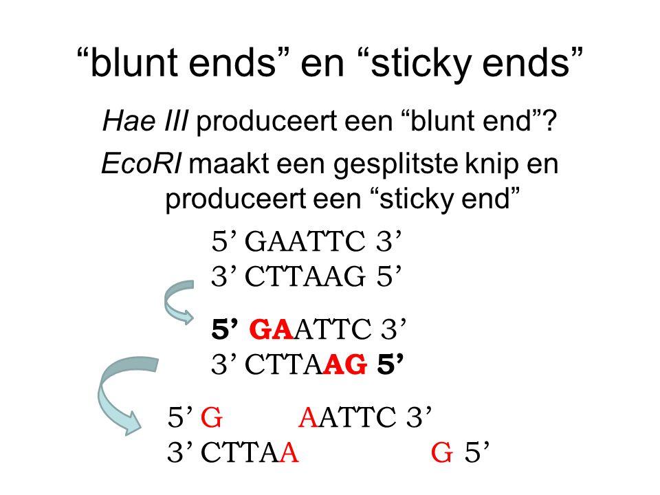 """""""blunt ends"""" en """"sticky ends"""" Hae III produceert een """"blunt end""""? EcoRI maakt een gesplitste knip en produceert een """"sticky end"""" 5' GAATTC 3' 3' CTTAA"""