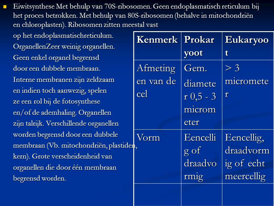 Eiwitsynthese Met behulp van 70S-ribosomen. Geen endoplasmatisch reticulum bij het proces betrokken. Met behulp van 80S-ribosomen (behalve in mitochon
