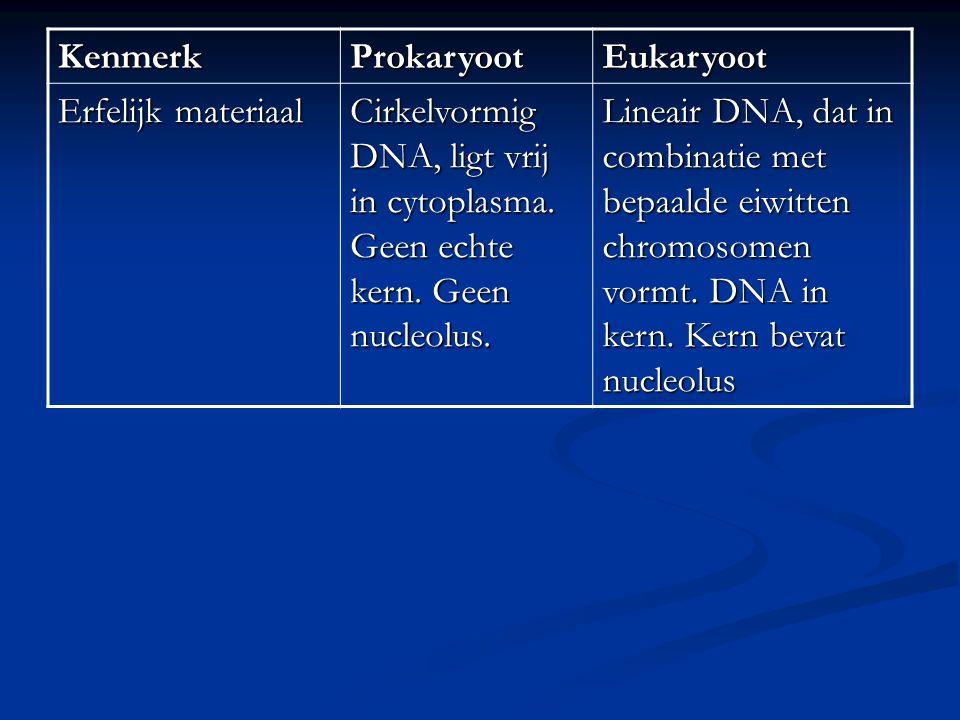 KenmerkProkaryootEukaryoot Erfelijk materiaal Cirkelvormig DNA, ligt vrij in cytoplasma. Geen echte kern. Geen nucleolus. Lineair DNA, dat in combinat