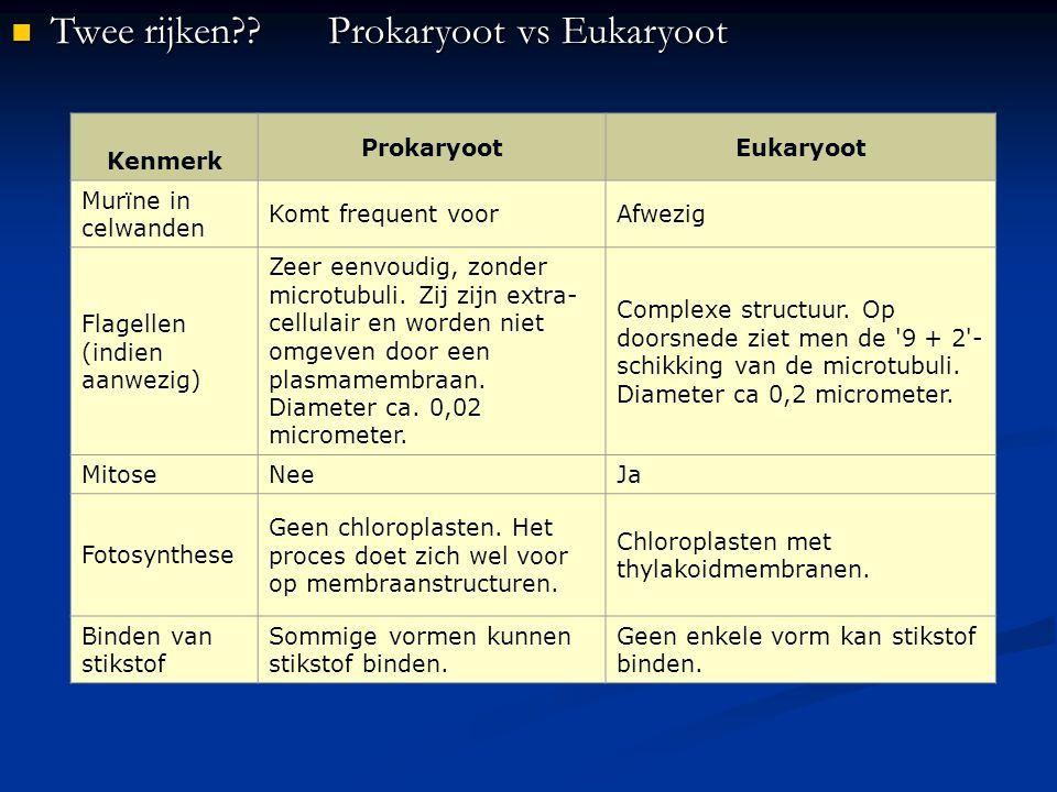 Twee rijken??Prokaryoot vs Eukaryoot Twee rijken??Prokaryoot vs Eukaryoot Kenmerk ProkaryootEukaryoot Murïne in celwanden Komt frequent voorAfwezig Fl