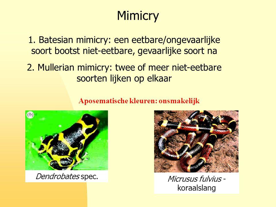 Mimicry 1. Batesian mimicry: een eetbare/ongevaarlijke soort bootst niet-eetbare, gevaarlijke soort na 2. Mullerian mimicry: twee of meer niet-eetbare