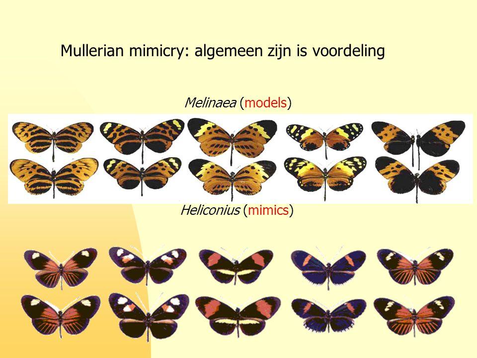 Mullerian mimicry: algemeen zijn is voordeling Melinaea (models) Heliconius (mimics)