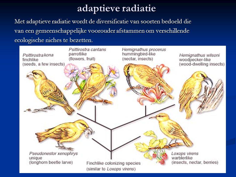 adaptieve radiatie Gevallen van adaptieve radiatie treden op als er lege niches beschikbaar zijn voor nieuwe soorten om te bezetten.