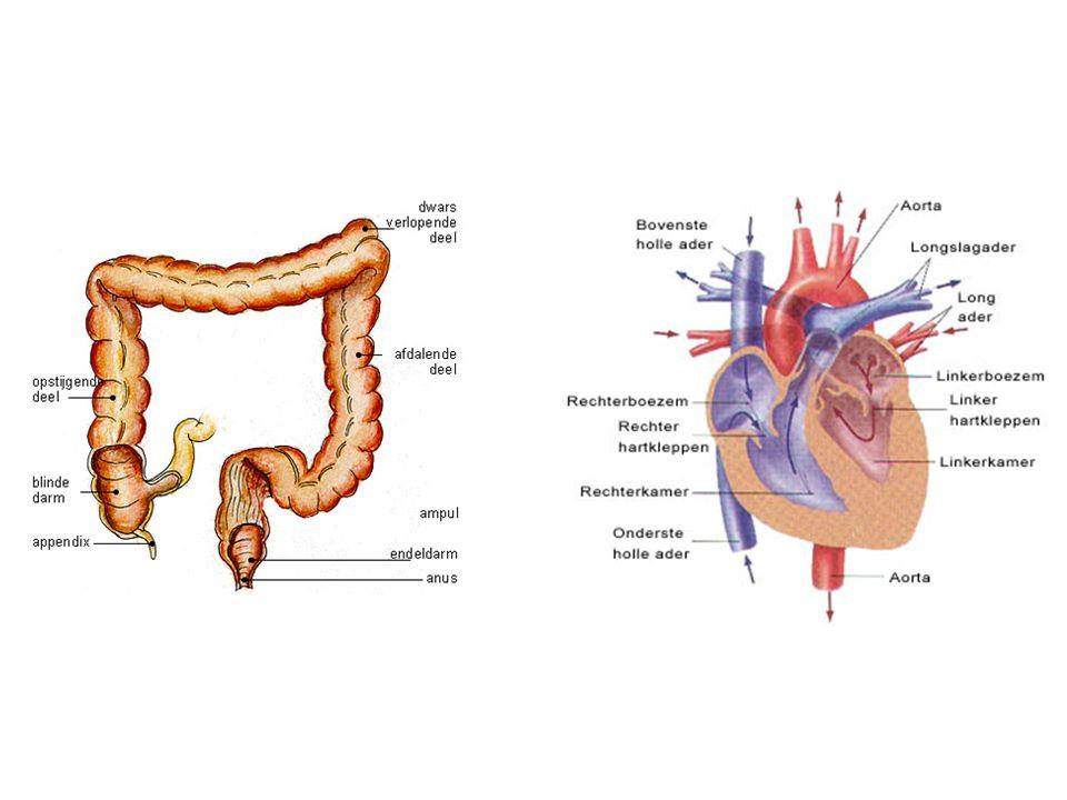 Latere hormoonproductie HCG: in eerste weken na de bevruchting door het embryo geproduceerd, daarna door de placenta Gele lichaam produceert progesteron en overleeft ongeveer 3 maanden, daarna neemt de placenta de progesteronproductie over.