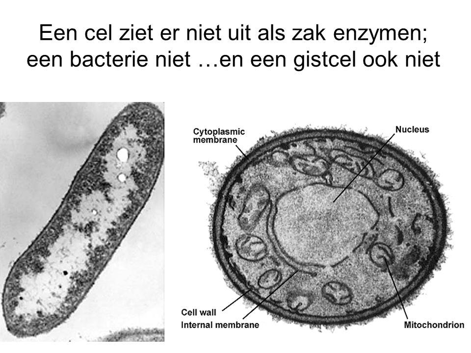 Een cel ziet er niet uit als zak enzymen; een bacterie niet …en een gistcel ook niet