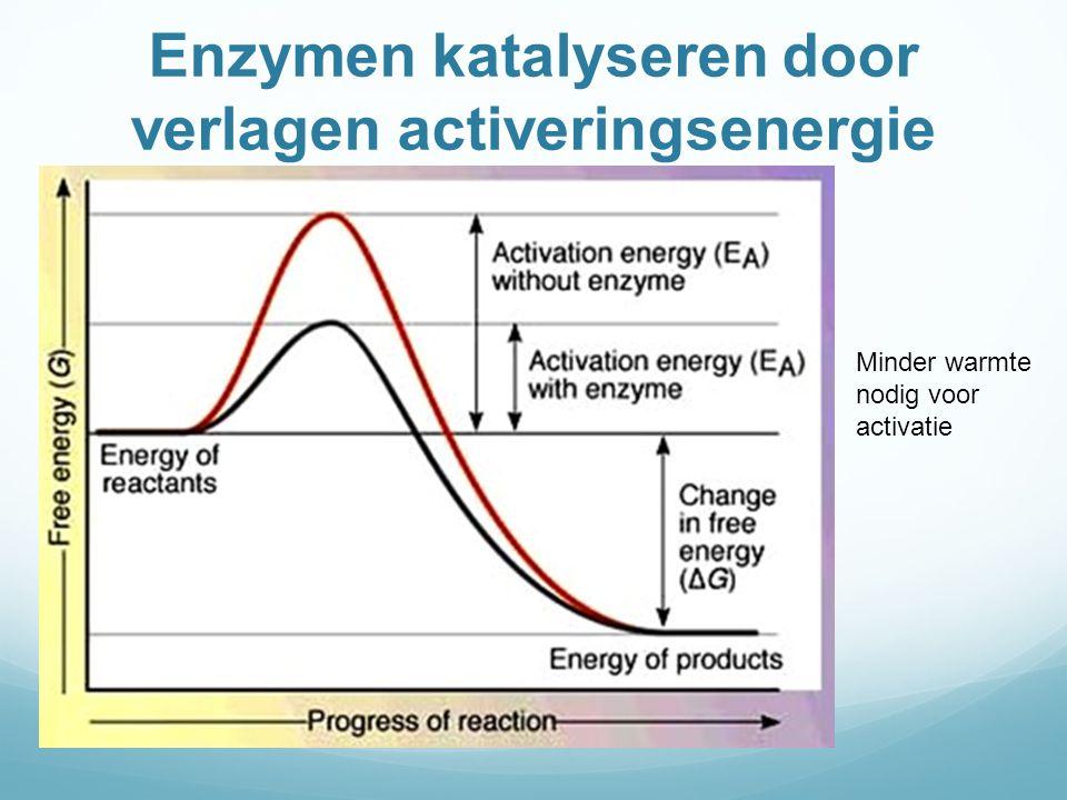 Enzymen katalyseren door verlagen activeringsenergie Minder warmte nodig voor activatie