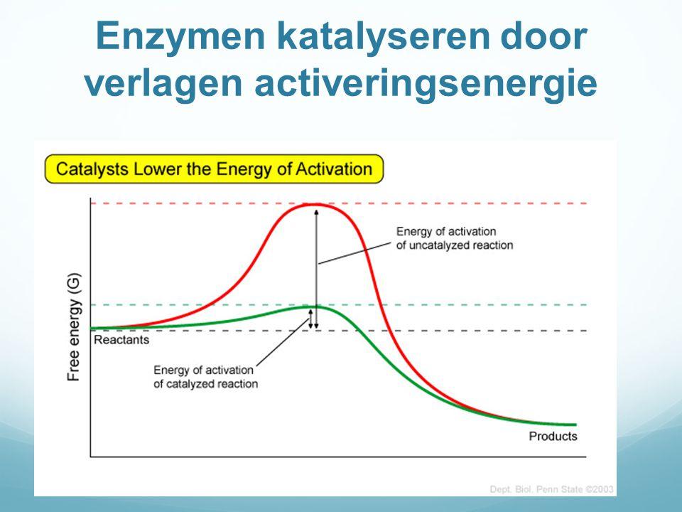 Remming van enzymactiviteit