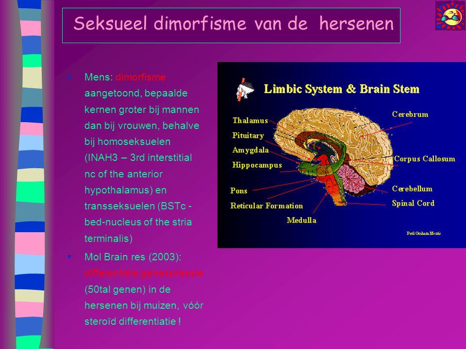 Seksueel dimorfisme van de hersenen  Mens: dimorfisme aangetoond, bepaalde kernen groter bij mannen dan bij vrouwen, behalve bij homoseksuelen (INAH3