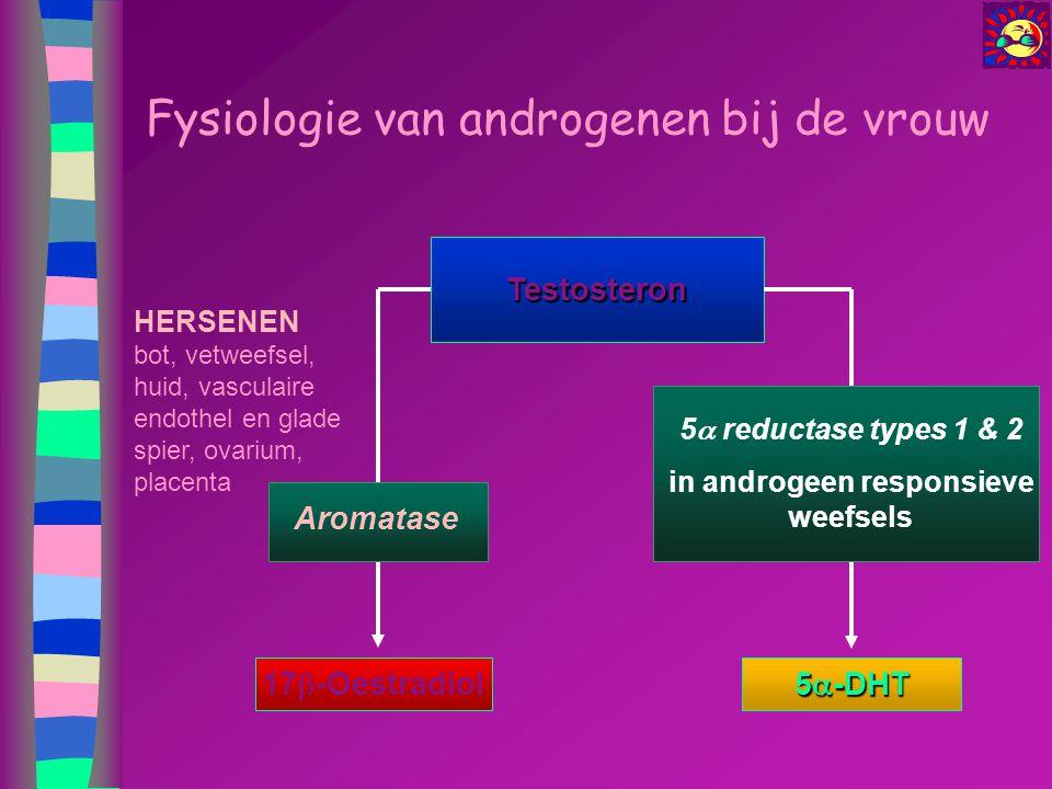 Fysiologie van androgenen bij de vrouw Testosteron 17  -Oestradiol HERSENEN bot, vetweefsel, huid, vasculaire endothel en glade spier, ovarium, place