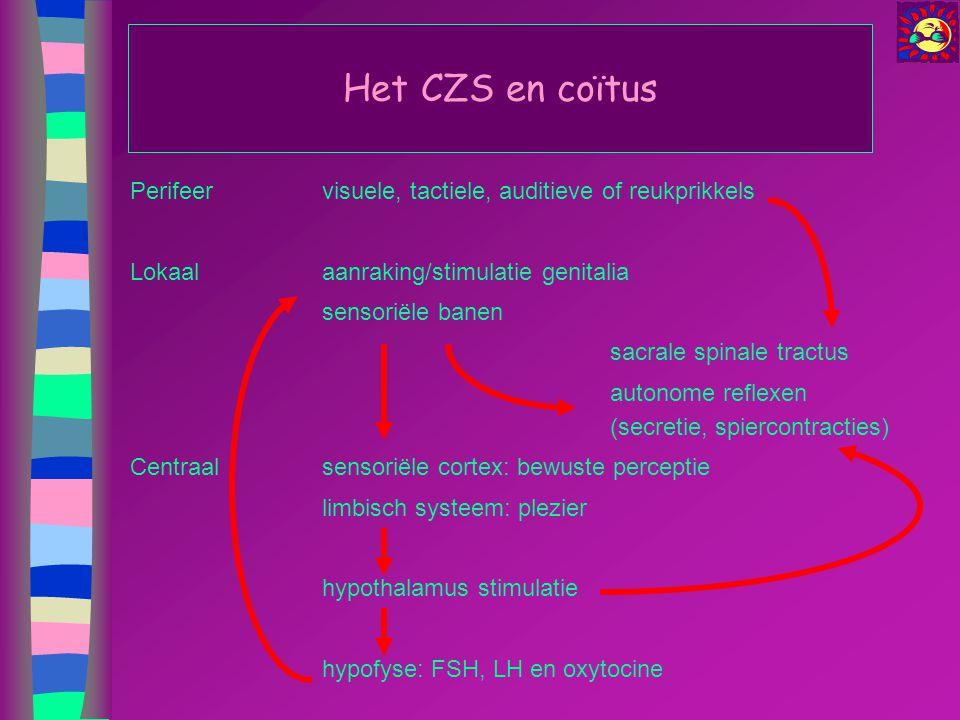 Het CZS en coïtus Perifeervisuele, tactiele, auditieve of reukprikkels Lokaal aanraking/stimulatie genitalia sensoriële banen sacrale spinale tractus