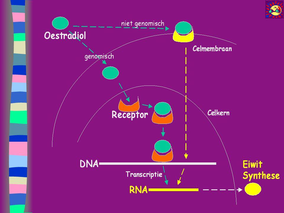 Werking van steroïden Oestradiol: –is ' neurotroof ': induceert synapsformatie, gaat de synapsdestructie oiv progesteron tegen remt apoptose en is anti-oxydans –Induceert progesteron receptoren (progesteron doet E2 receptoren dalen!) Progesteron –Allopregnanolon (metaboliet en neurosteroïd): bindt centraal op GABA-A receptor (centrale inhibitie -> sedatief-hypnotisch cfr barbituraten) –>< pregnenolon: GABA antagonist !
