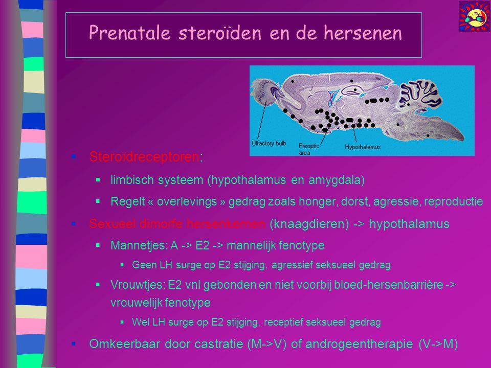 Prenatale steroïden en de hersenen  Steroïdreceptoren:  limbisch systeem (hypothalamus en amygdala)  Regelt « overlevings » gedrag zoals honger, do