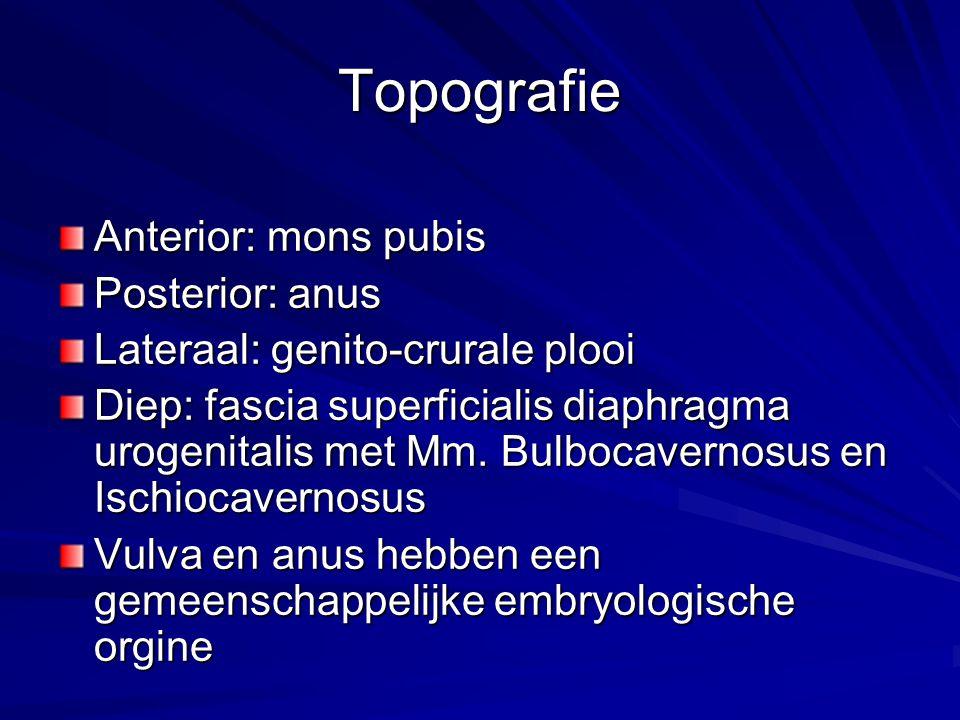 Topografie Anterior: mons pubis Posterior: anus Lateraal: genito-crurale plooi Diep: fascia superficialis diaphragma urogenitalis met Mm. Bulbocaverno