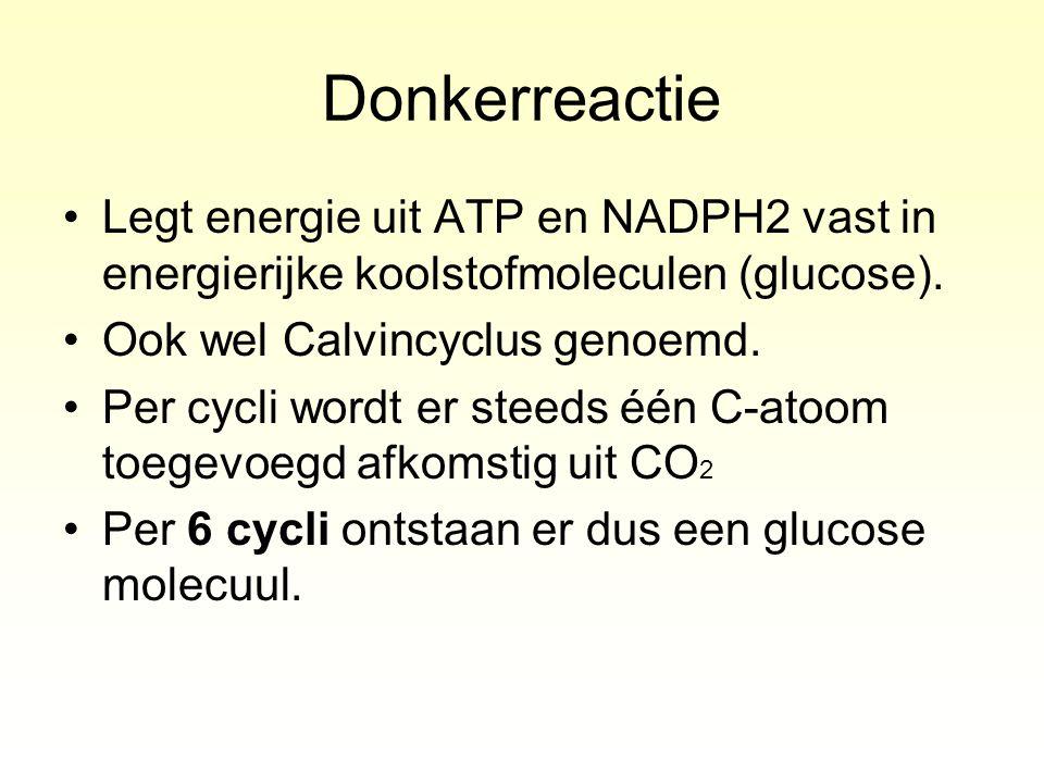 Donkerreactie Legt energie uit ATP en NADPH2 vast in energierijke koolstofmoleculen (glucose). Ook wel Calvincyclus genoemd. Per cycli wordt er steeds