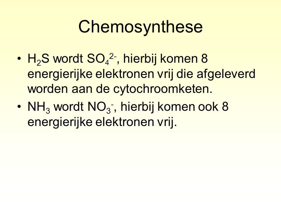 Chemosynthese H 2 S wordt SO 4 2-, hierbij komen 8 energierijke elektronen vrij die afgeleverd worden aan de cytochroomketen. NH 3 wordt NO 3 -, hierb