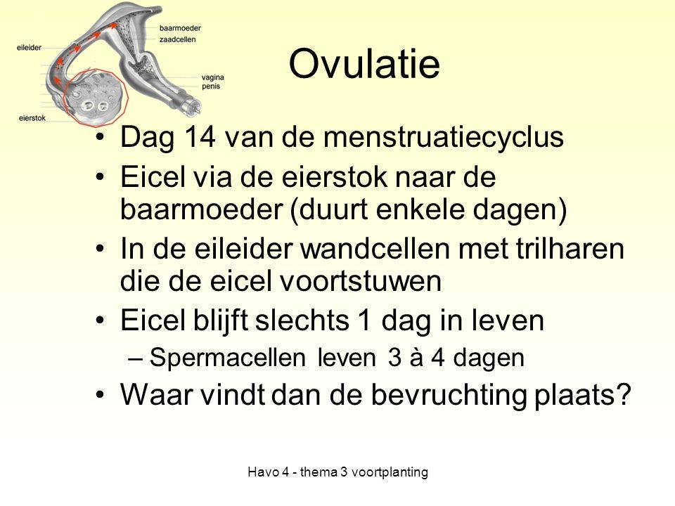 Havo 4 - thema 3 voortplanting Ovulatie Dag 14 van de menstruatiecyclus Eicel via de eierstok naar de baarmoeder (duurt enkele dagen) In de eileider w