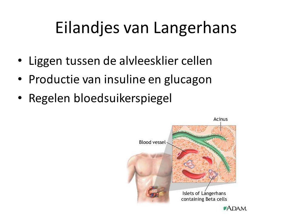 Eilandjes van Langerhans Liggen tussen de alvleesklier cellen Productie van insuline en glucagon Regelen bloedsuikerspiegel