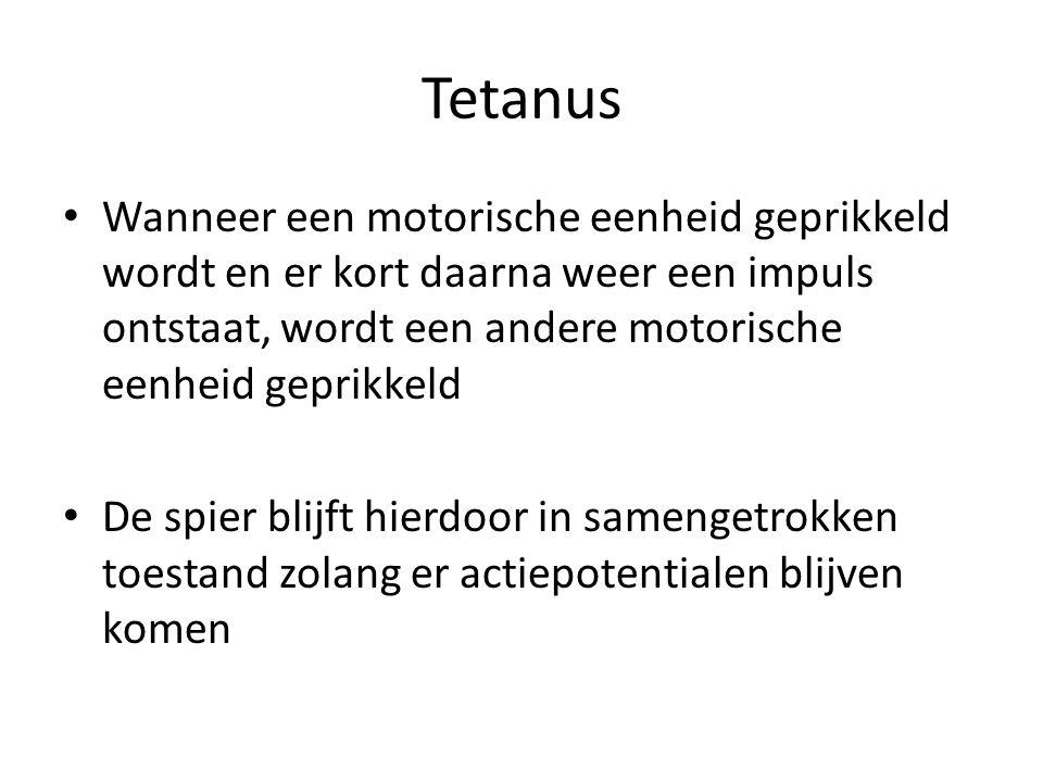 Tetanus Wanneer een motorische eenheid geprikkeld wordt en er kort daarna weer een impuls ontstaat, wordt een andere motorische eenheid geprikkeld De