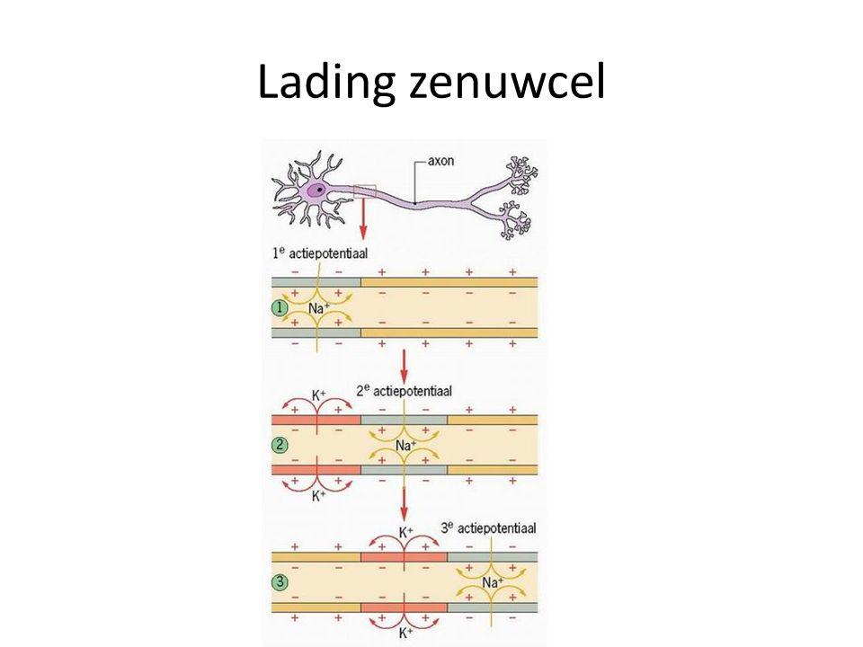 Lading zenuwcel