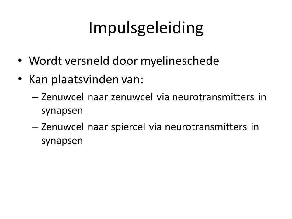Impulsgeleiding Wordt versneld door myelineschede Kan plaatsvinden van: – Zenuwcel naar zenuwcel via neurotransmitters in synapsen – Zenuwcel naar spi