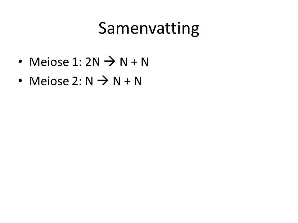 Samenvatting Meiose 1: 2N  N + N Meiose 2: N  N + N