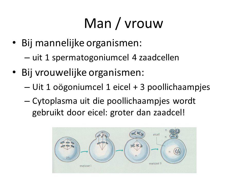 Man / vrouw Bij mannelijke organismen: – uit 1 spermatogoniumcel 4 zaadcellen Bij vrouwelijke organismen: – Uit 1 oögoniumcel 1 eicel + 3 poollichaamp