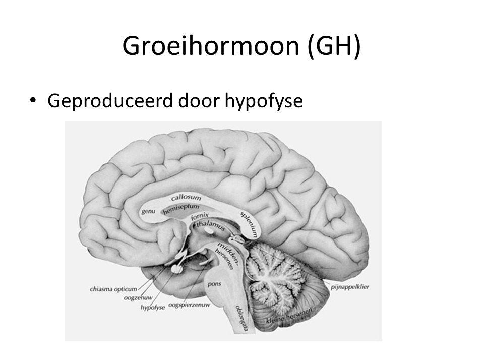 Groeihormoon (GH) Afscheiding GH gebeurt in pieken – Na eten – Tijdens slaap Grootste hoeveelheid gevormd tijdens – Babyfase – Puberteit Functie – Groei weefsels (vooral bot) – Bevordert aanmaak eiwitten en afbraak vetten – Stimuleert celdelingen