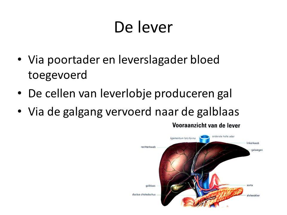 De lever Via poortader en leverslagader bloed toegevoerd De cellen van leverlobje produceren gal Via de galgang vervoerd naar de galblaas