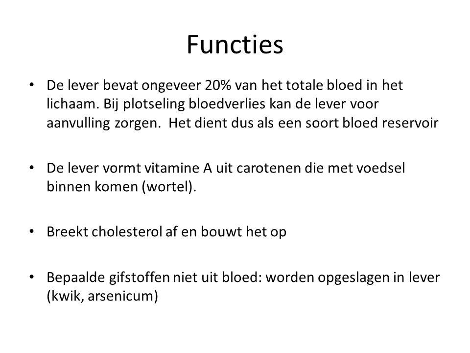 Functies De lever bevat ongeveer 20% van het totale bloed in het lichaam. Bij plotseling bloedverlies kan de lever voor aanvulling zorgen. Het dient d