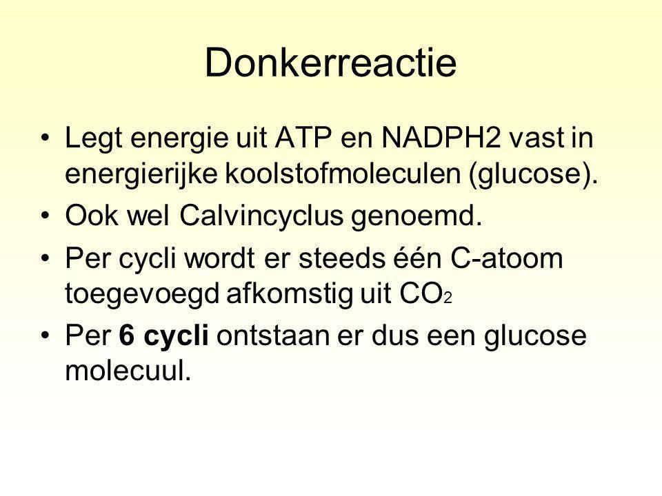 Donkerreactie Legt energie uit ATP en NADPH2 vast in energierijke koolstofmoleculen (glucose).