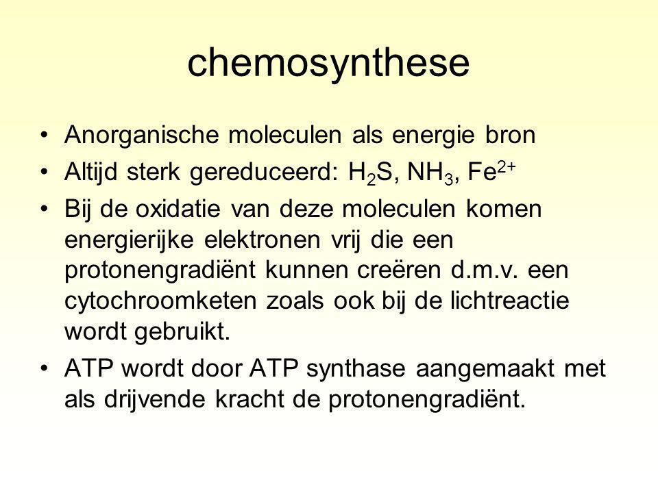 chemosynthese Anorganische moleculen als energie bron Altijd sterk gereduceerd: H 2 S, NH 3, Fe 2+ Bij de oxidatie van deze moleculen komen energierijke elektronen vrij die een protonengradiënt kunnen creëren d.m.v.