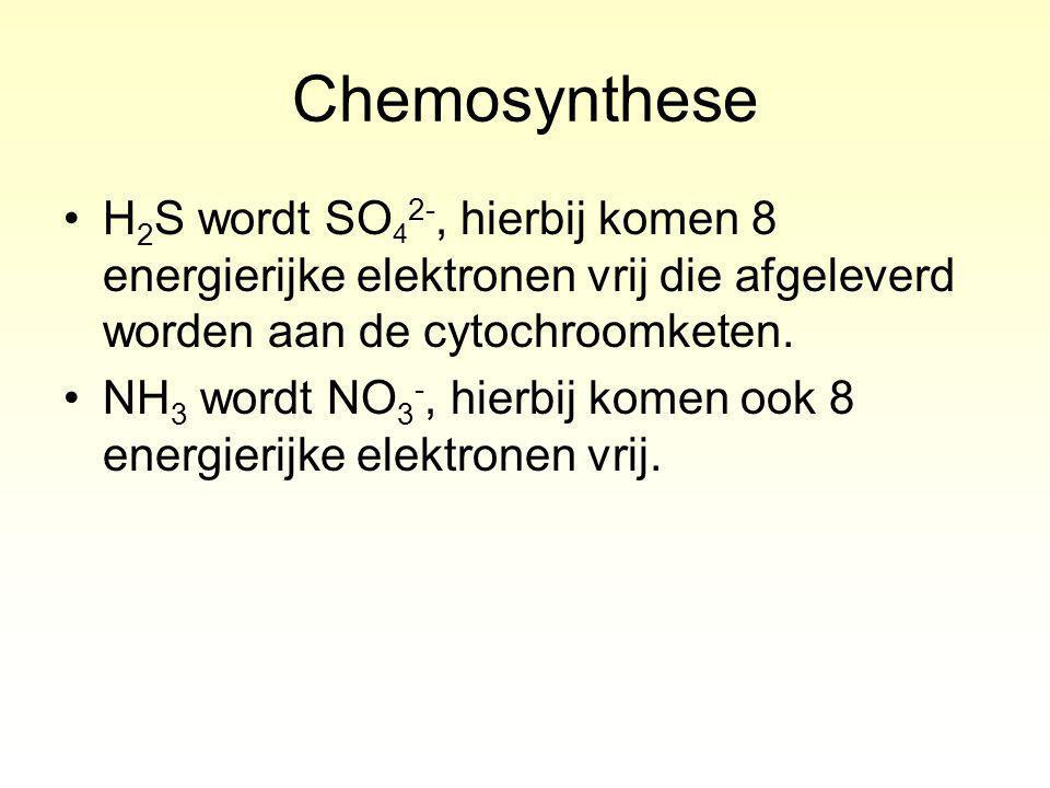 Chemosynthese H 2 S wordt SO 4 2-, hierbij komen 8 energierijke elektronen vrij die afgeleverd worden aan de cytochroomketen.