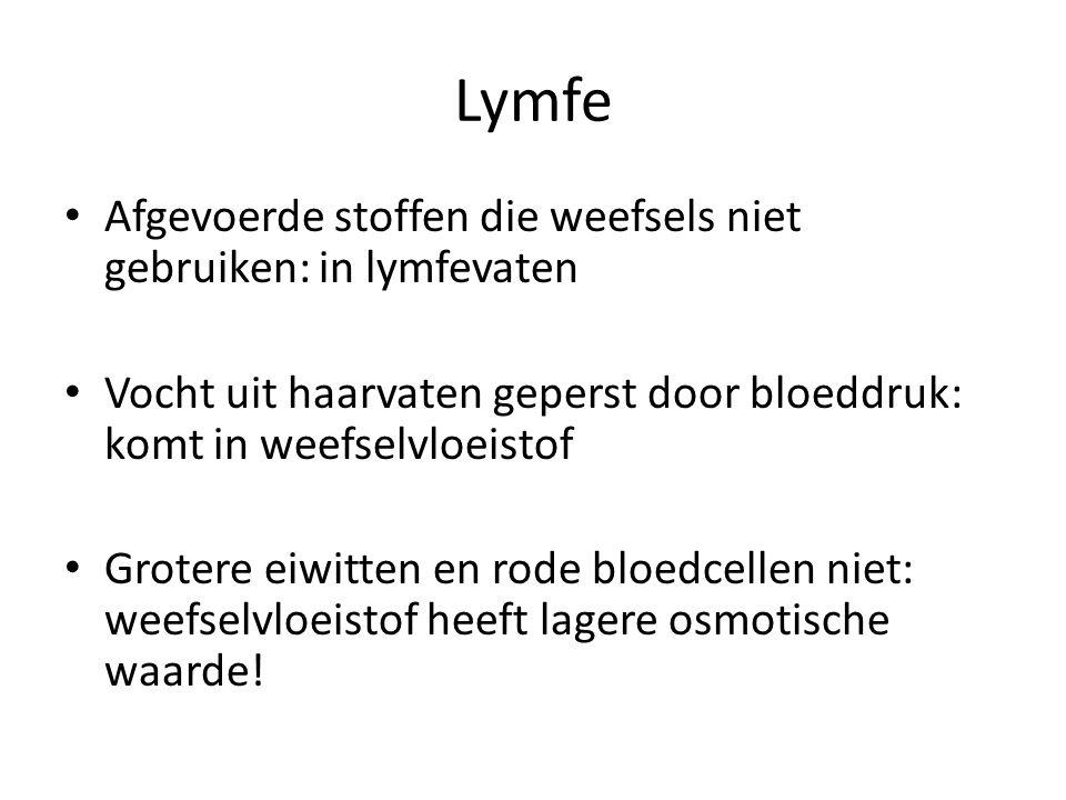 Lymfe Begin haarvaten: hoge broeddruk: geen passief transport van water uit het weefselvloeistof.