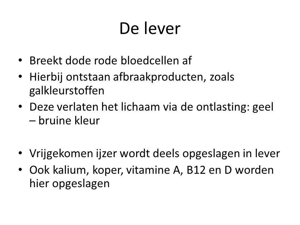 De lever Breekt dode rode bloedcellen af Hierbij ontstaan afbraakproducten, zoals galkleurstoffen Deze verlaten het lichaam via de ontlasting: geel –