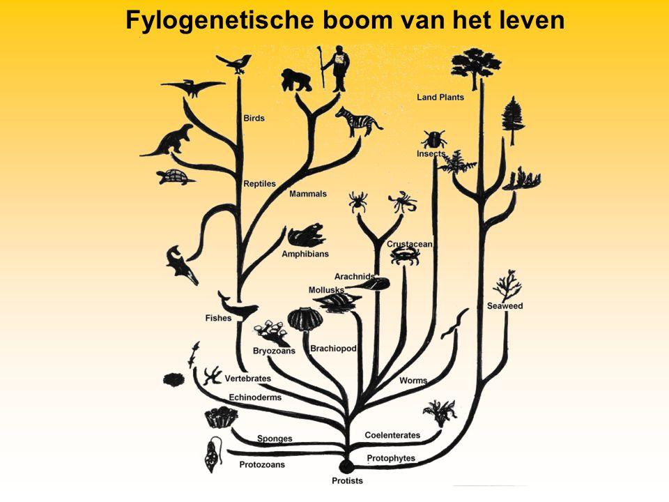 Meercelligen Uit de eerste eenvoudige meercellige organismen ontstonden steeds ingewikkeldere organismen.