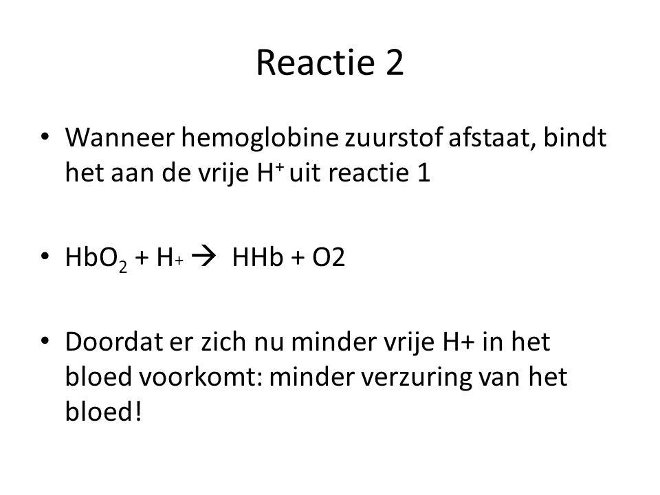 Reactie 2 Wanneer hemoglobine zuurstof afstaat, bindt het aan de vrije H + uit reactie 1 HbO 2 + H +  HHb + O2 Doordat er zich nu minder vrije H+ in