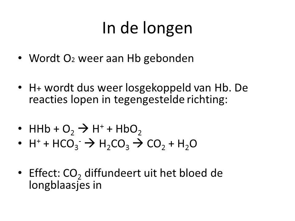 In de longen Wordt O 2 weer aan Hb gebonden H + wordt dus weer losgekoppeld van Hb. De reacties lopen in tegengestelde richting: HHb + O 2  H + + HbO